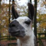 Ein unvergessliches Erlebnis – Wild- und Erlebnispark Daun