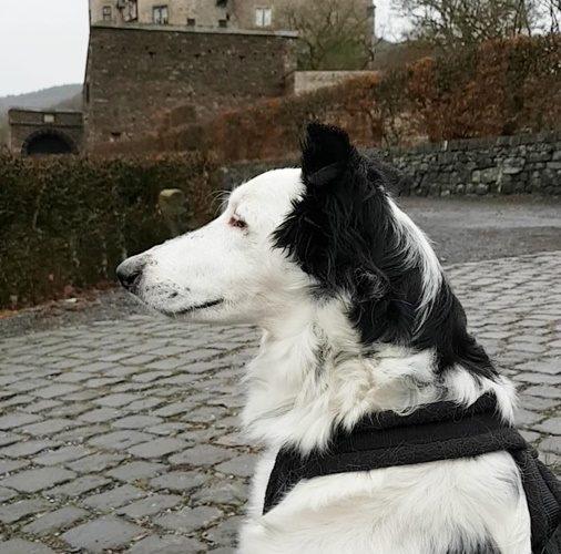 Greta Prothelis GPS Tracker Hunde 03