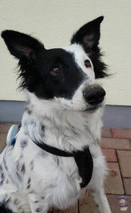Greta Prothelis GPS Tracker Hunde 04